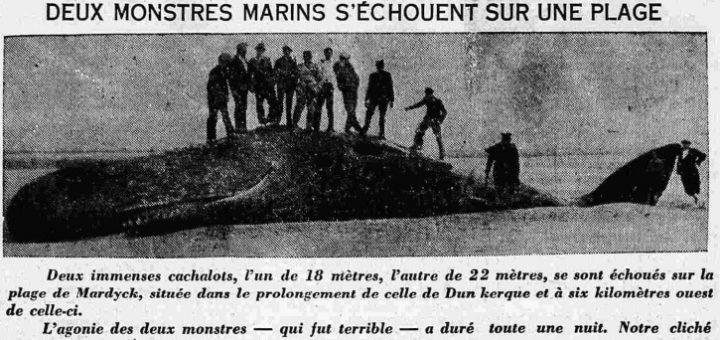 monstres-marins